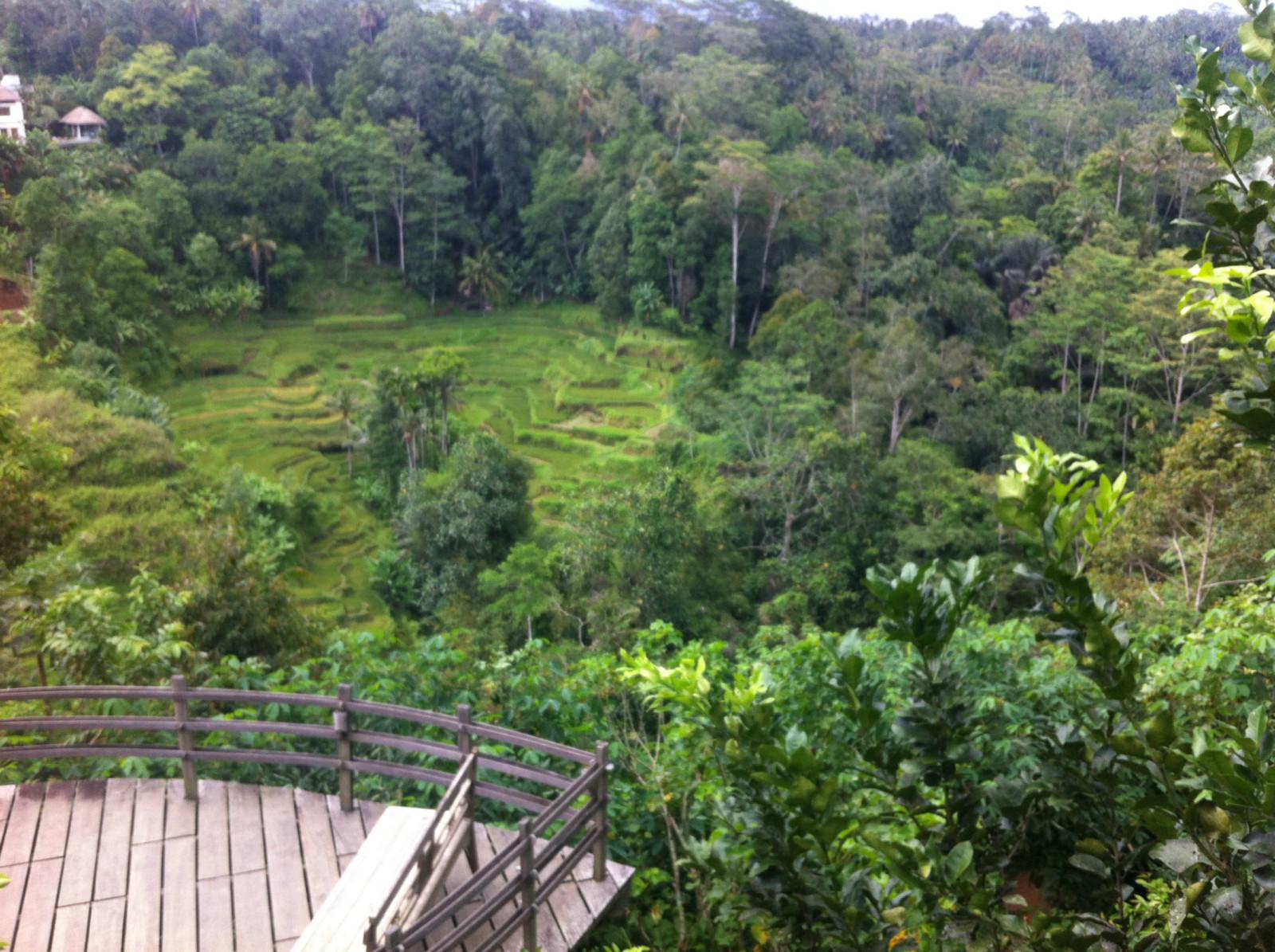 种植园里有梯田,峡谷,别墅群,观景平台.