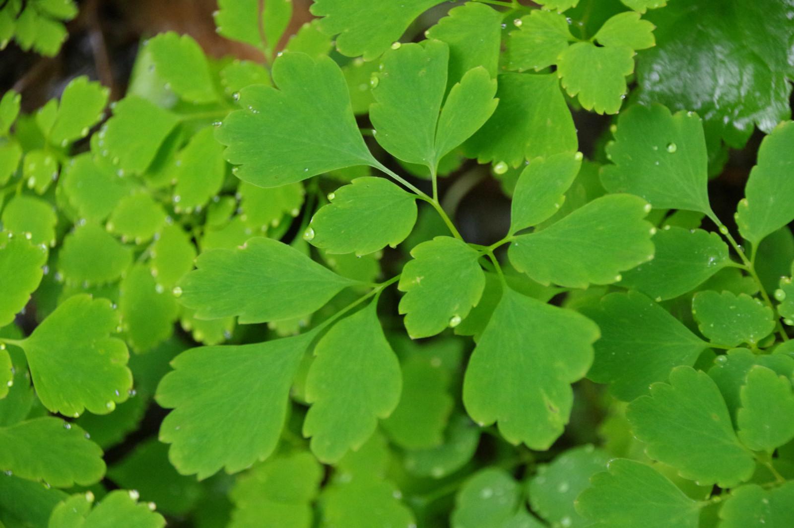 背景 壁纸 绿色 绿叶 树叶 植物 桌面 1600_1064