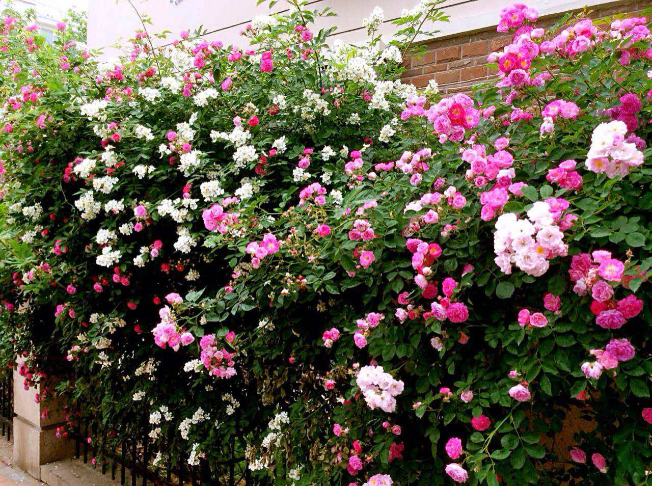 壁纸 花 花墙 景观 墙