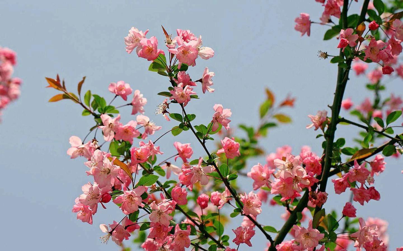 春天来了,带大家走进花的世界
