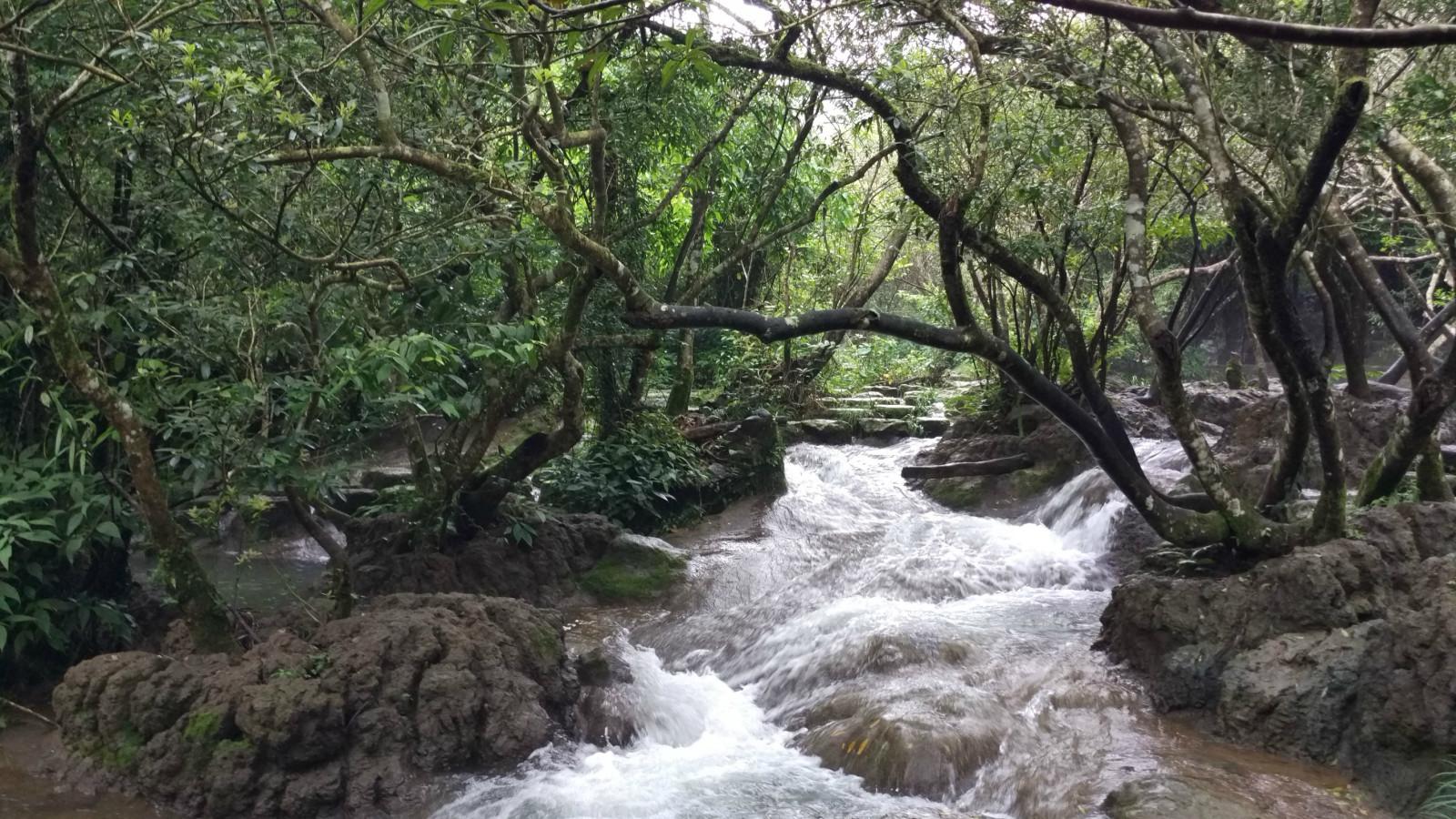 林溪穿插的水上森林