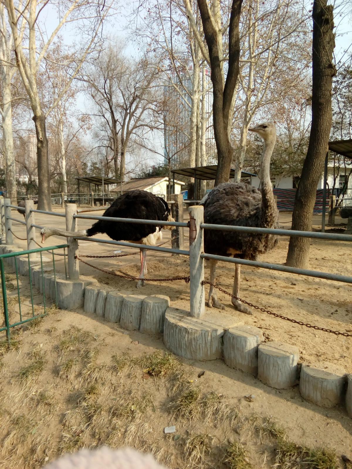 动物园内景带栏杆图片大全