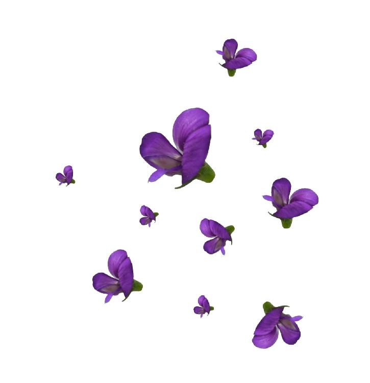 ps免抠素材:花与花边