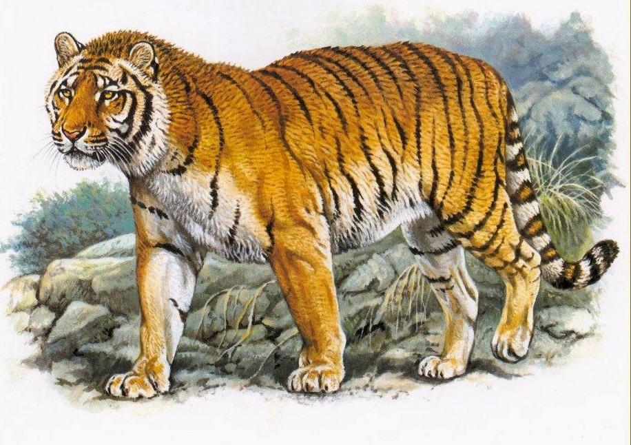 宁波雅戈尔动物园发生老虎