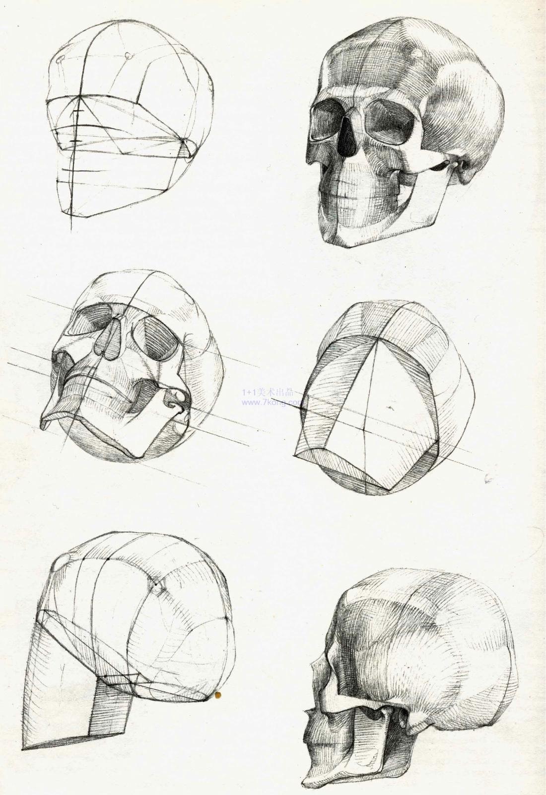 列宾美院艺用解剖 10