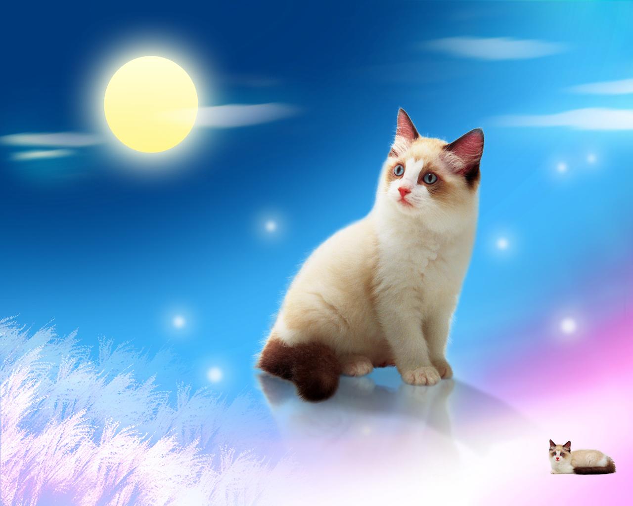 壁纸 动物 狗 狗狗 猫 猫咪 小猫 桌面 1280_1024