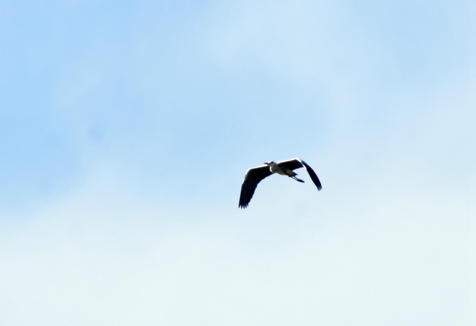 壁纸 动物 鸟 鸟类 桌面 1600_1098