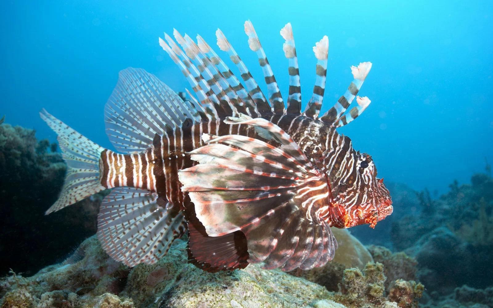 壁纸 动物 海底 海底世界 海洋馆 水族馆 鱼 鱼类 1024_640