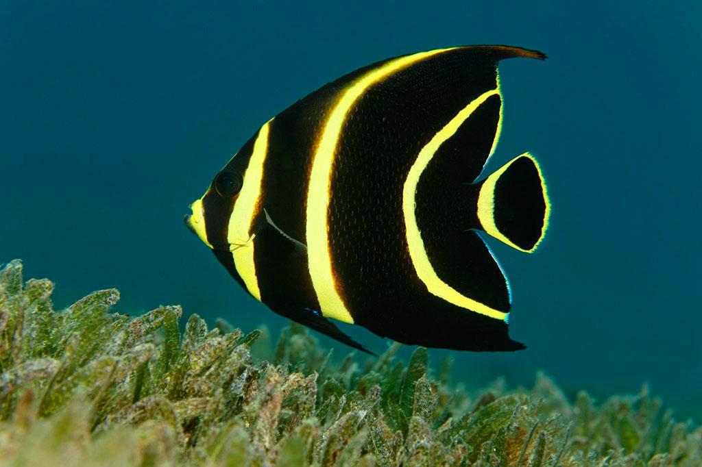 海底动物手工制作图片