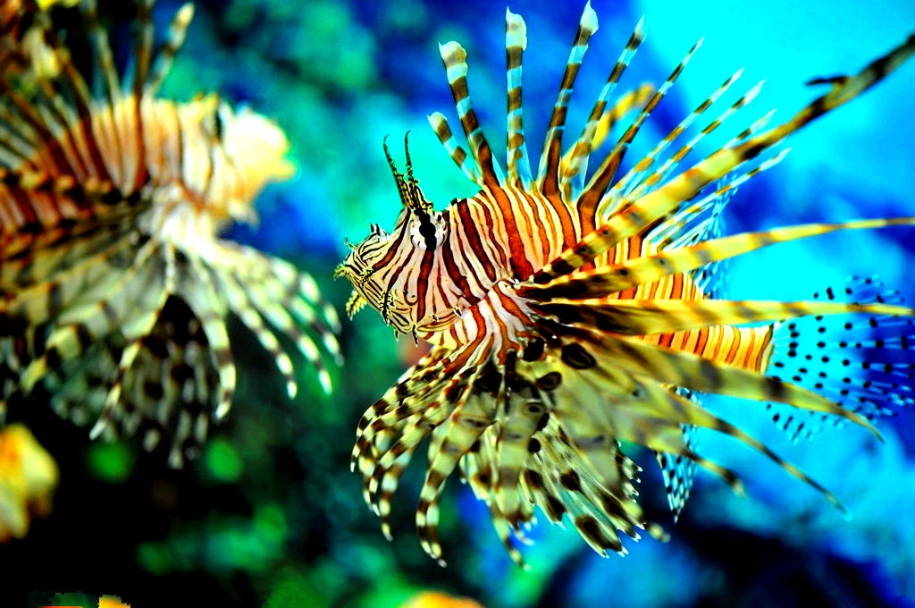 壁纸 动物 海底 海底世界 海洋馆 水族馆 鱼 鱼类 1024_680