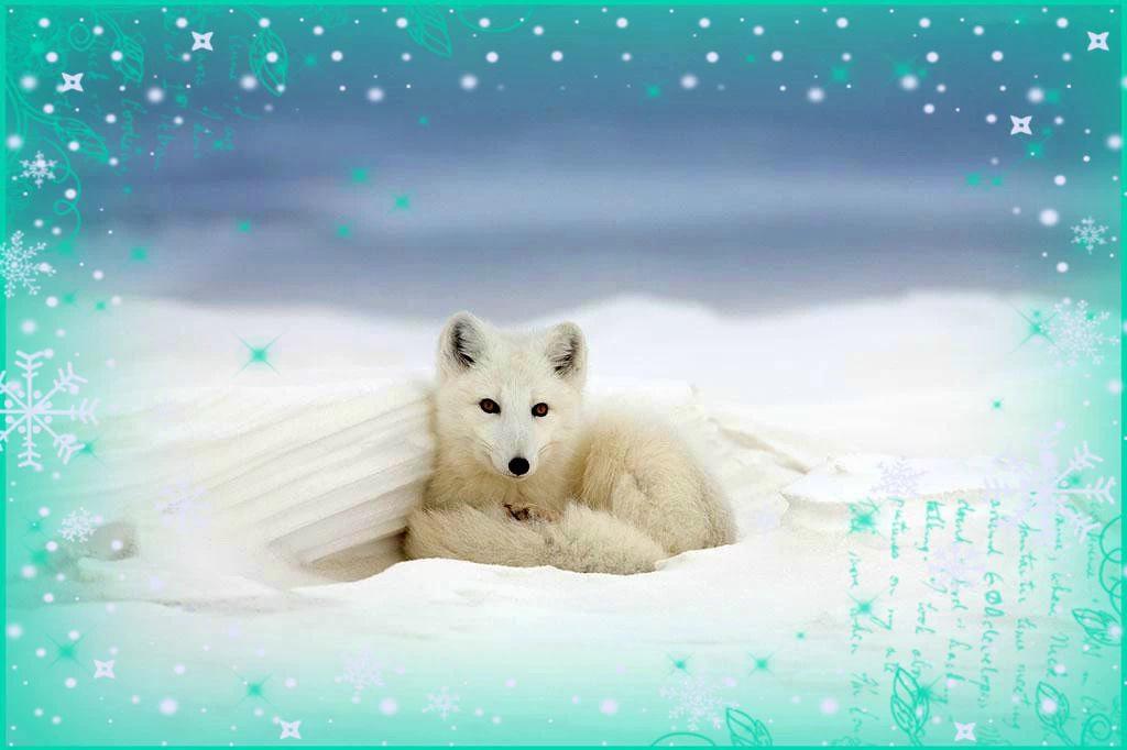 白狐合唱歌谱简谱歌谱