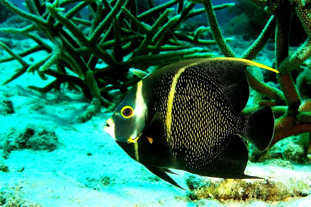 壁纸 动物 海底 海底世界 海洋馆 水族馆 鱼 鱼类 1024_684