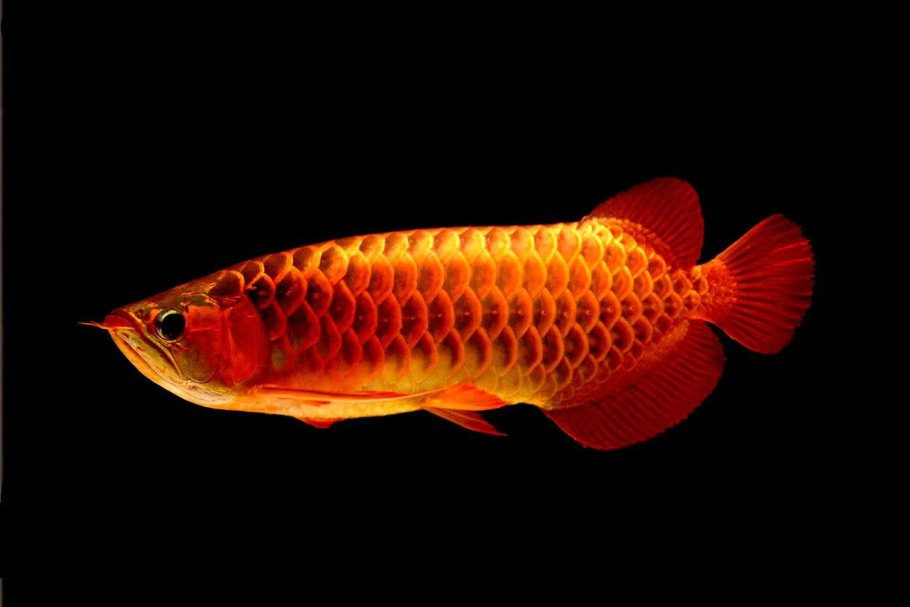 动物 鱼 鱼类 1292