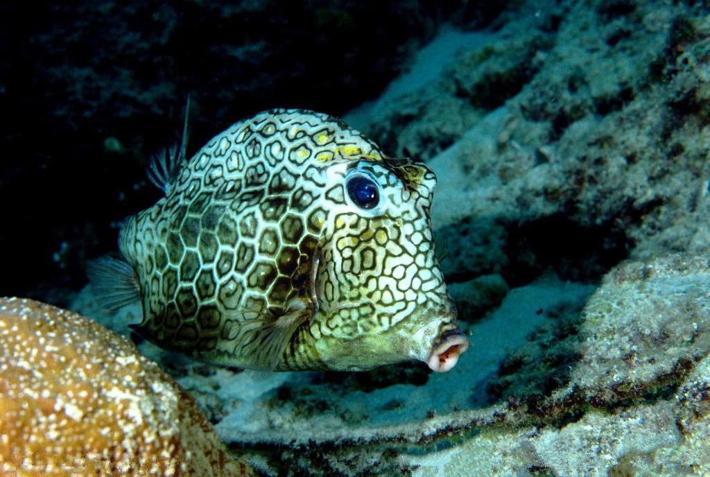 壁纸 海底 海底世界 海洋馆 水族馆 1024_688