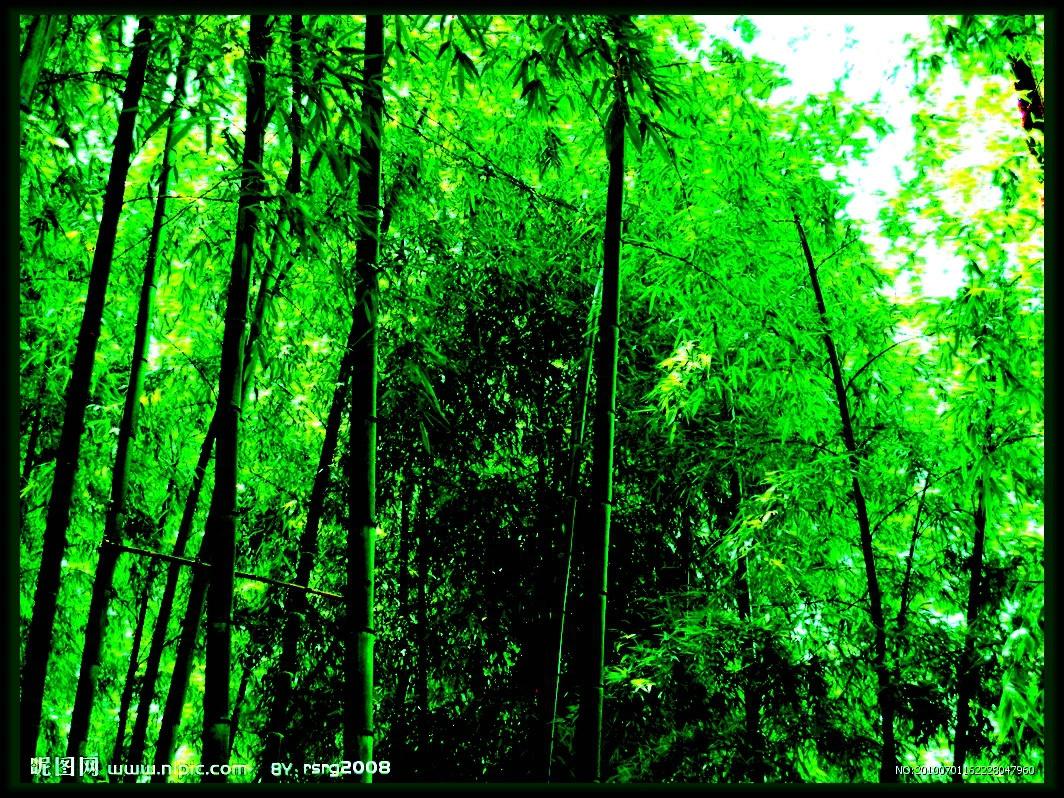 壁纸 风景 森林 植物 桌面