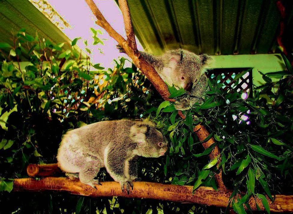 野生动物系列(七)史前和未来动物
