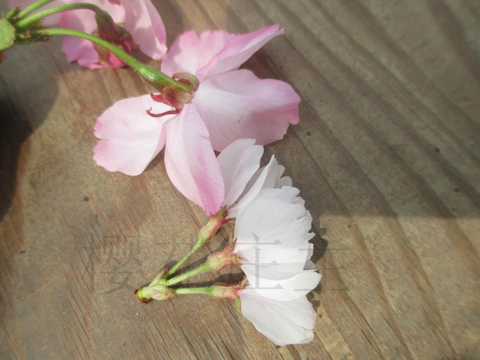 大花折纸步骤