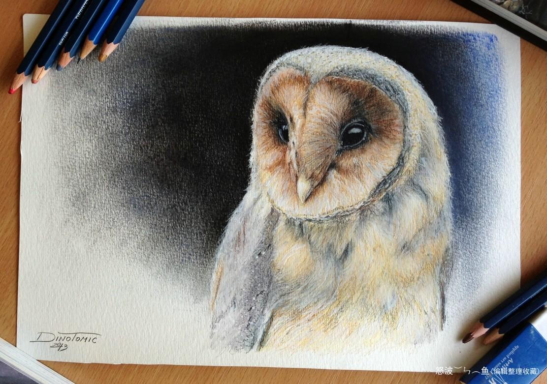 dino tomic铅笔画--动物