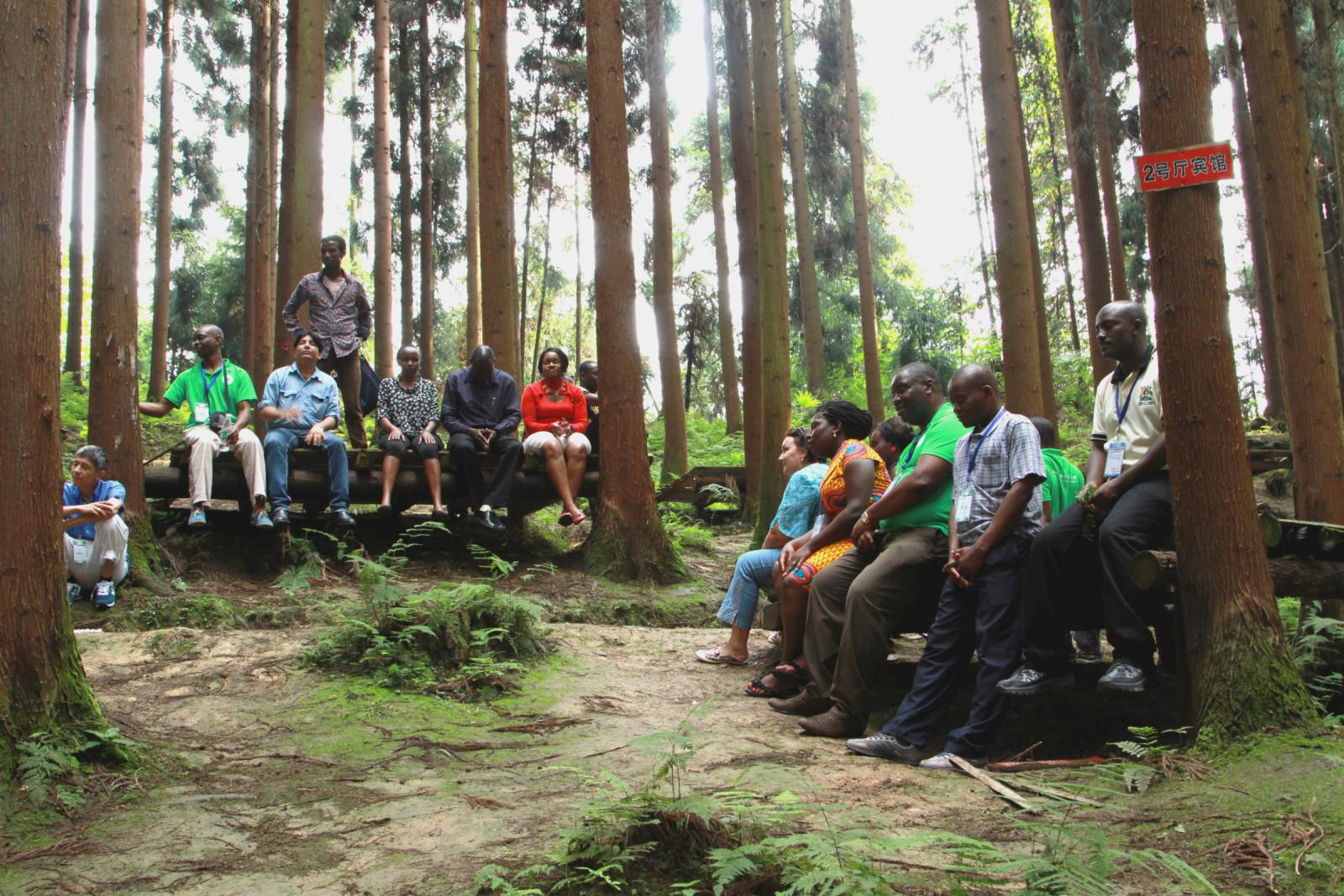 非洲木材森林图片