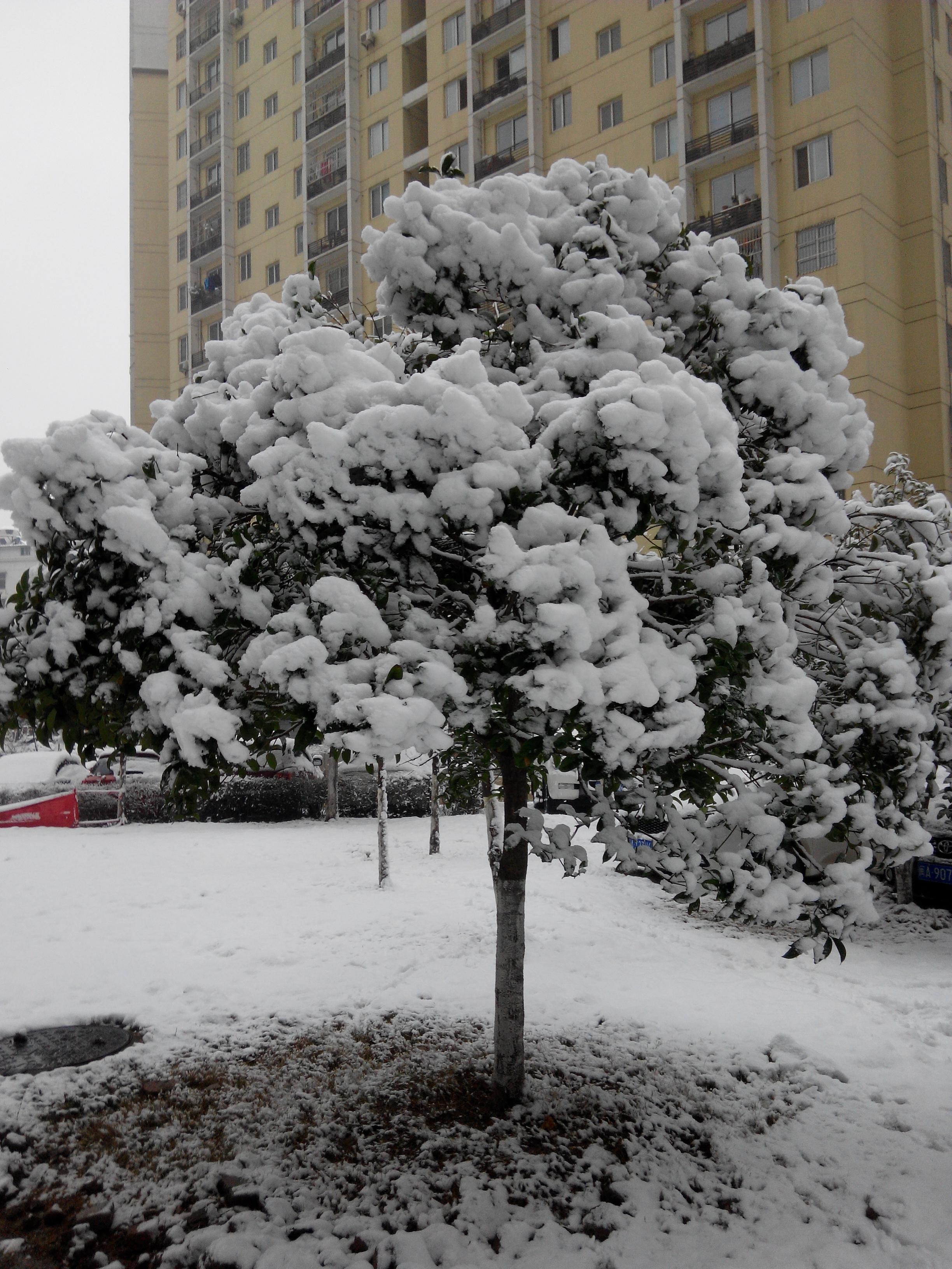 武汉市的雪