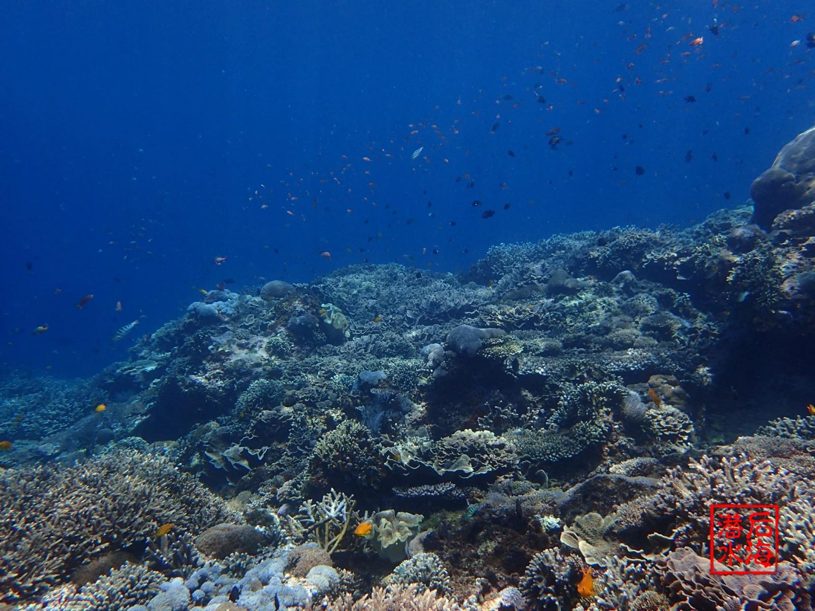 怀念蓝梦岛自由潜水时光