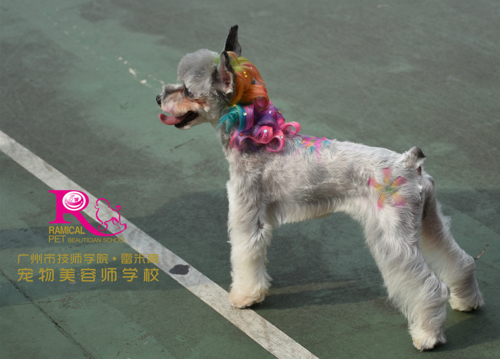 宠物雕花步骤图片