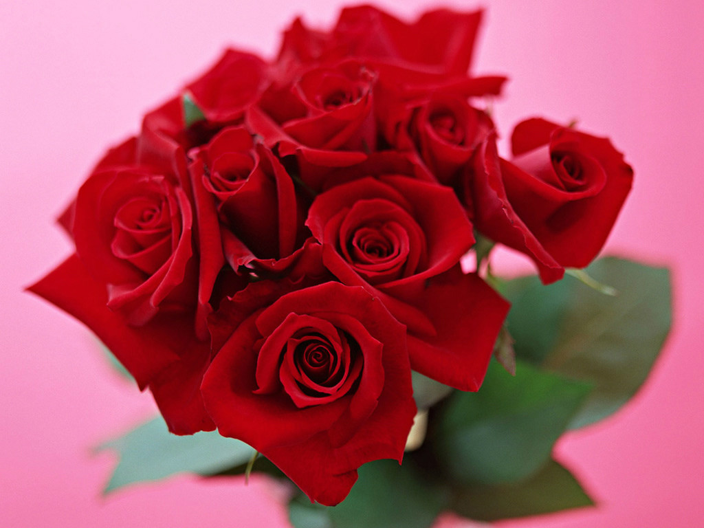 记得很小的时候,玫瑰花的美丽我是从电视