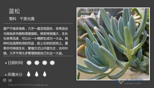常见多肉植物图鉴[请在wifi环境
