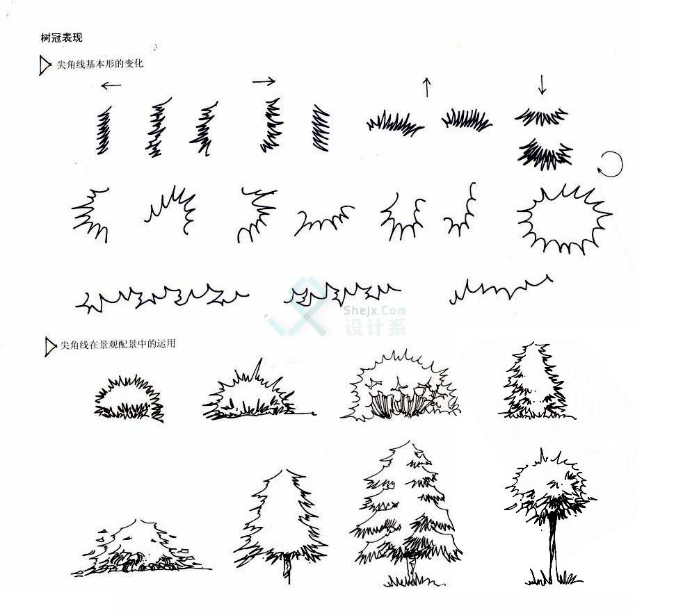 手绘植物单体线稿的画法