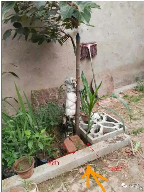 水管种植物幼儿园图片