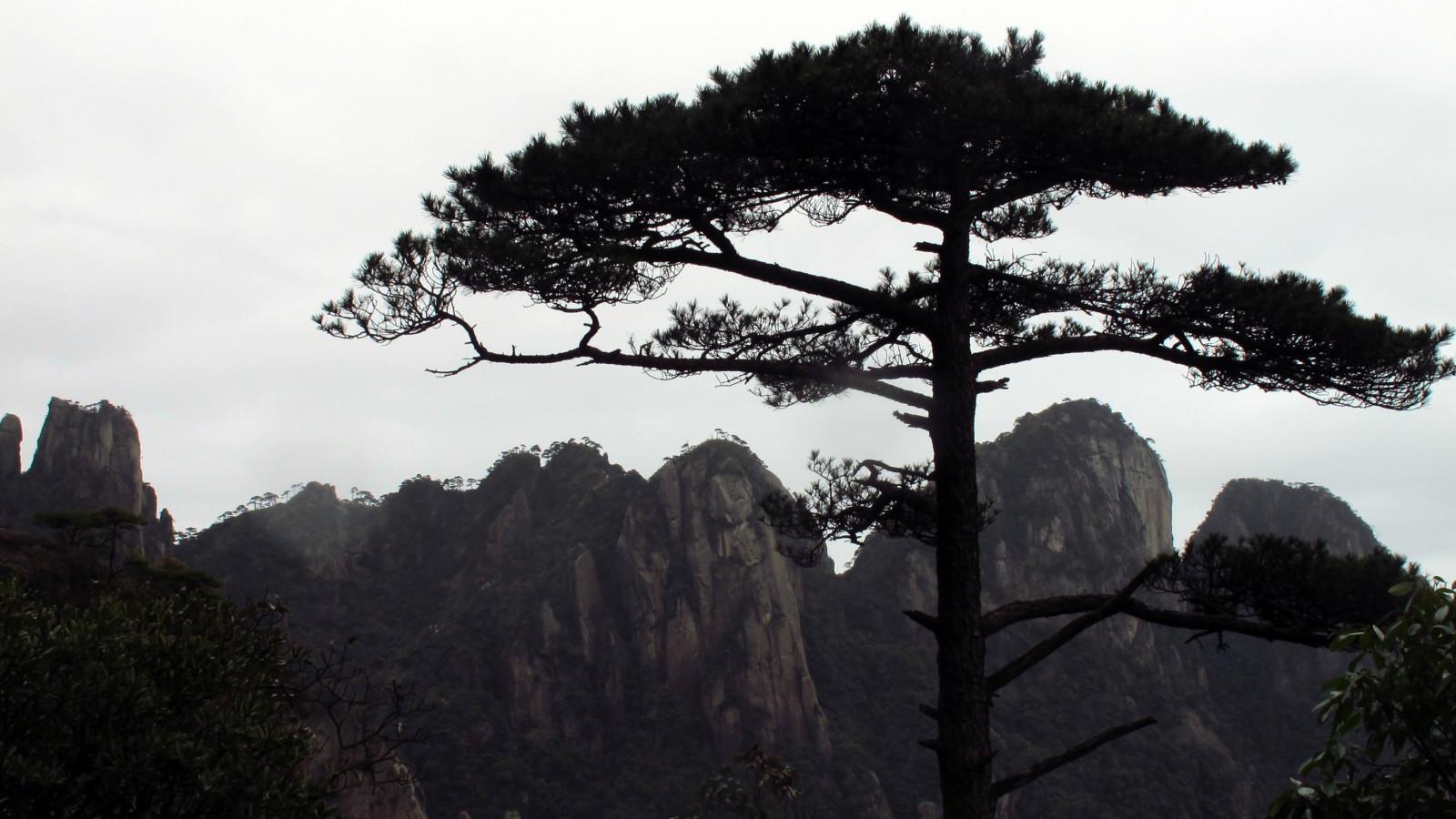 壁纸 风景 树 松 松树 1600_900
