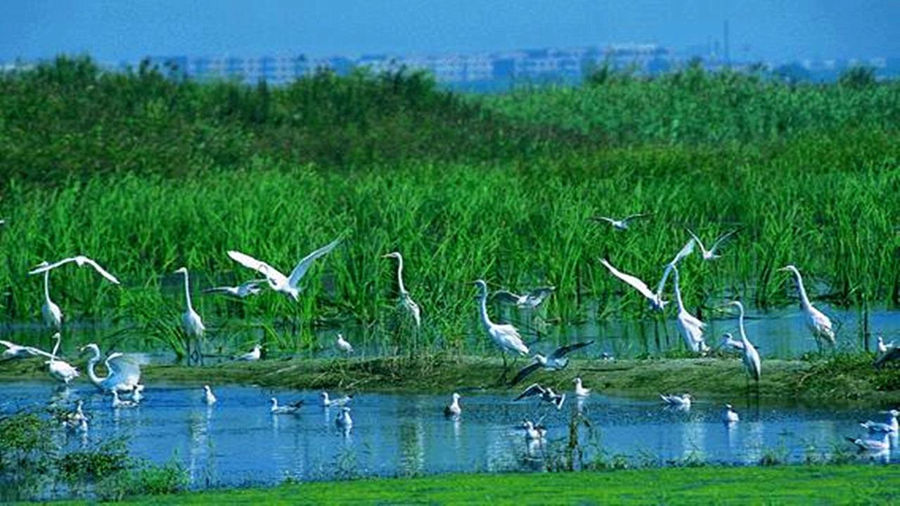 双台河口国家级自然保护区位于辽宁省盘锦市境内,总面积12.8万公顷。 1987年经辽宁省政府批准建立,1988年晋升为国家级,主要保护对象为丹顶鹤、白鹤等珍稀水禽和海岸河口湾湿地生态系统。地处辽东湾辽河入海口处,是由淡水携带大量营养物质的沉积并与海水互相浸淹混合而形成的适宜多种生物繁衍的河口湾湿地。保护区生物资源极其丰富,仅鸟类就有191种,其中属国家重点保护动物有丹顶鹤、白鹤、白鹳、黑鹳等28种,是多种水禽的繁殖地(为世界濒危鸟类黑嘴鸥的最大繁殖地)、越冬地和众多迁徙鸟类的驿站,既是丹顶鹤最南端的繁殖区