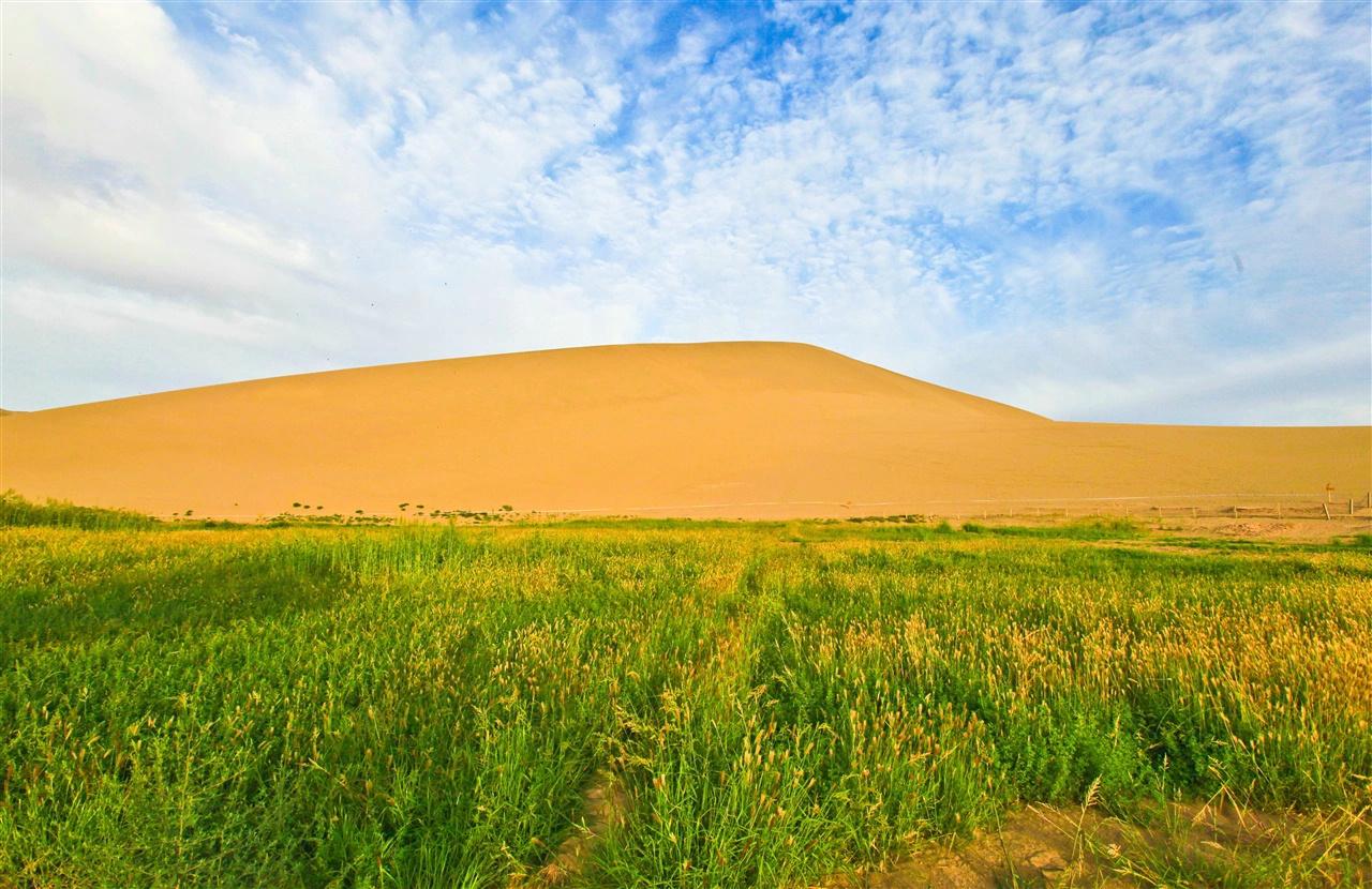 沙漠植物风景图片壁纸